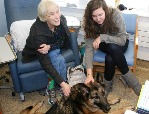 animal-therapy-chair-patient