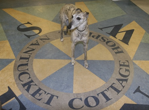 animal-therapy-dog-compass